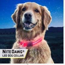 NiteDawg LED Collar